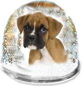 boule de neige chien fond blanc